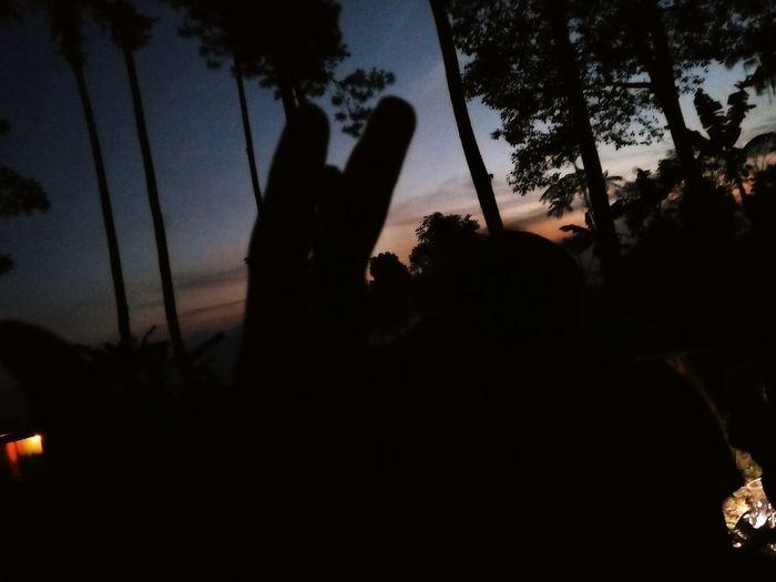 Sunset Dark Tree Area Forest
