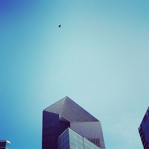 Building Blue Clear Sky Building Exterior Flying Architecture Sky Day Freedom Free Flyingbird Flying High Flying In The Sky Flying Away Bird