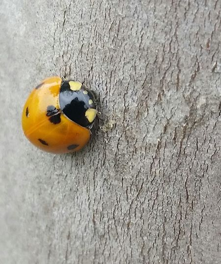 Ladybug Visit