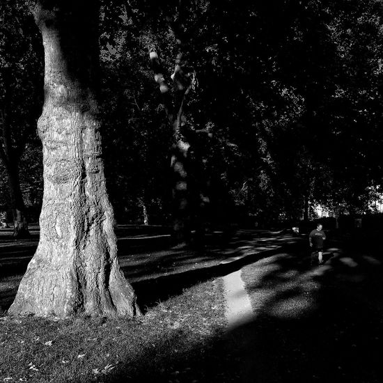 London. Green park. 6 am in black and white Tree Tree Trunk Nature Outdoors Shadow Growth Day Tranquility Sunlight Beauty In Nature Sun Spots Old Tree Nature_collection The Great Outdoors - 2017 EyeEm Awards High Contrast Bnw Green Park London Urban Impressions Blackandwhite Outdoor Photography Beauty In Nature Morning Morning Light Morning Rituals EyeEm LOST IN London Postcode Postcards Black And White Friday Black And White Friday Black And White Friday Stories From The City