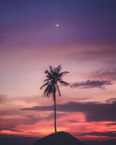 Low angle view of silhouette coconut palm tree against sky at sunset