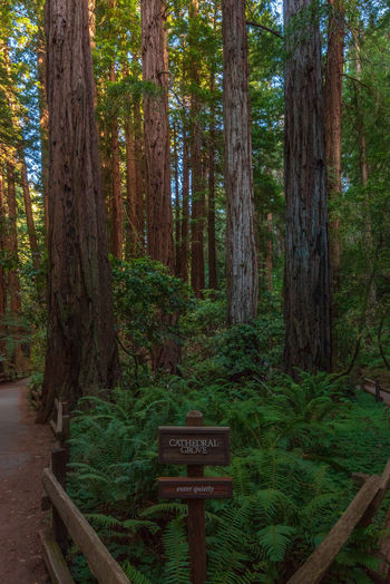 Redwoods Tree Text Plant Forest Western Script Sign Trunk Tree Trunk Communication Land WoodLand Information Nature Information Sign Growth Wood - Material No People Day Tranquility Direction Guidance Outdoors