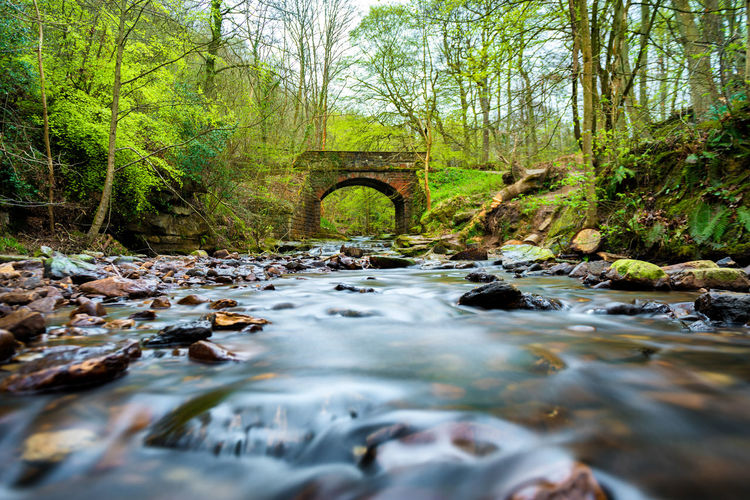 Arch Beauty In Nature Day Downloading Flowing Flowing Water Forest Land Nature No People Outdoors Plant Rock Rock - Object Scenics - Nature Solid Stream - Flowing Water Surface Level Tranquility Tree Water