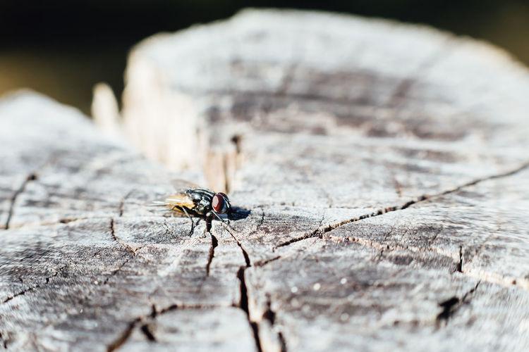 High Angle View Of Housefly On Tree Stump