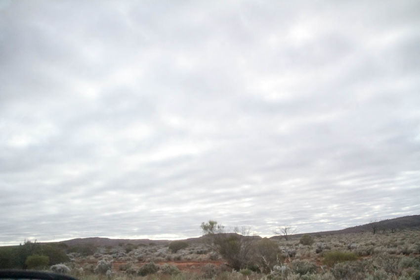 Nullarbor Plain Nullarbor Plain Nature Nullarbor Sky Cloud - Sky Plant Nature Beauty In Nature Scenics - Nature Day No People Tranquility Tranquil Scene Environment Landscape Outdoors Land Non-urban Scene