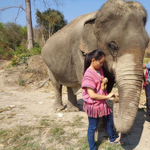 Elephant Indian Elephant Mammal Domestic Animals Outdoors Adult Togetherness Washing Women Men Safari Animals Day People Animal Trunk Only Women Nature Adults Only