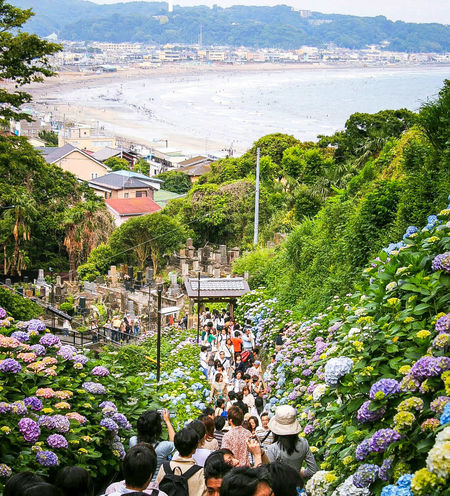Temple of Hydrangea at Kamakura, Japan. Flowers Temple Landscape Sea