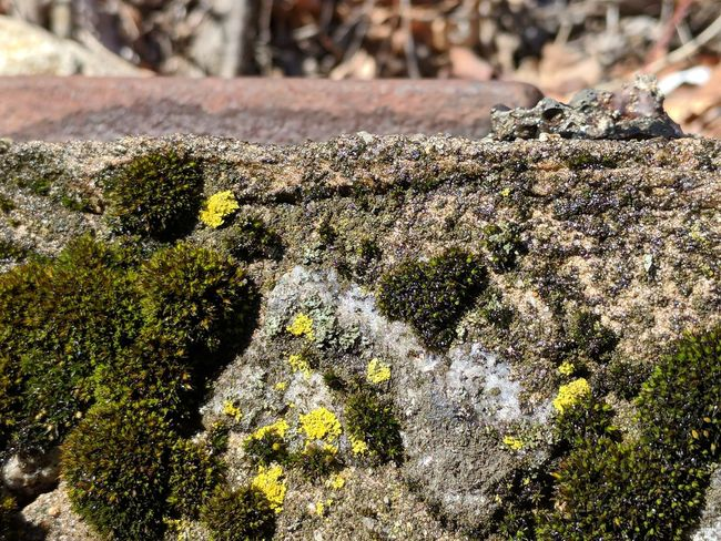 """""""I 💚 Moss"""" """"No Filters"""" Moss Moss & Lichen Mossy Mossy Wall Cement Wall Metal Rocks Leaves Outdoors Day Sunlight No People Close-up Nature Growth"""