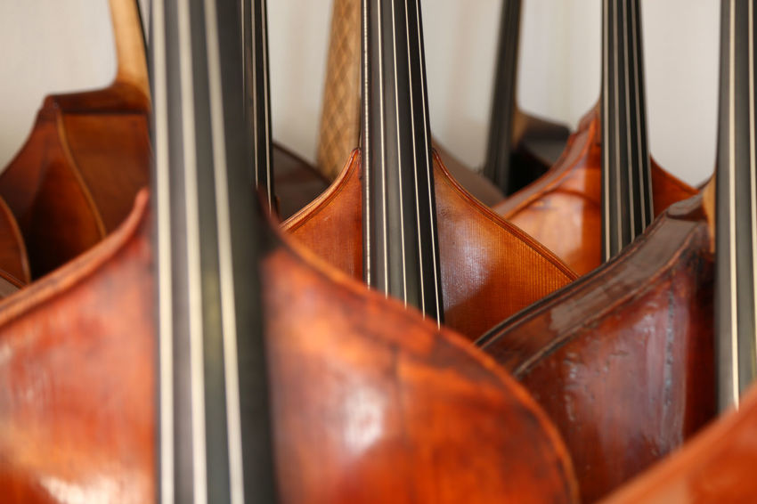 Lots of double basses at a luthier's Close-up Day Indoors  Music Musical Instrument Musical Instrument String No People String Instrument Violin Classical Music Instrument Maker Strings Of Music Jazz Kontrabass Luthier Bassbauer Double Bass Double Basses String Bass Arts Culture And Entertainment Kontrabass Instruments