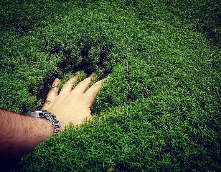 Mosk Nature Retezatnationalpark Human Hand Men Grass Close-up Green Color