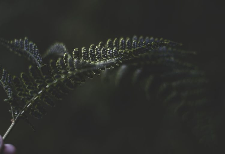 Macro shot of water drops on plant