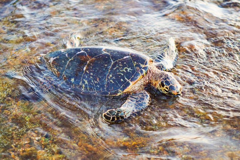 Close-up of turtle swimming in river