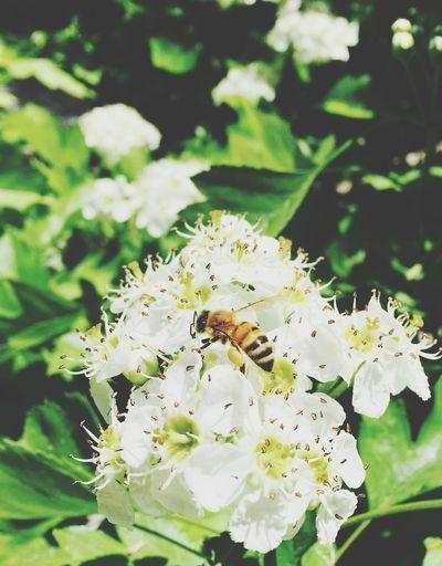 Bienenfleiß wird erfordert.