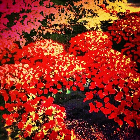 Red and green and green and red. Overcooked Vivid Flowers First Eyeem Photo