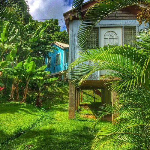 Grenada GOLDENCLiCKS Caribbean_beautiful_landscapes Westindies_landscape Wu_caribbean Instagram Ig_caribbean Islandlivity Ilivewhereyouvacation Thebestpicsoftheearth Exploringtheglobe EarthCaptures Iphoneonly HDR