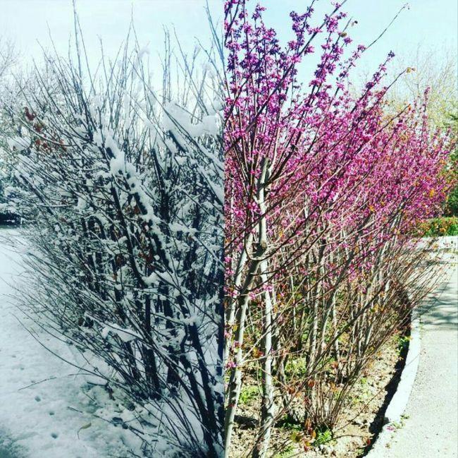 Winter & Spring