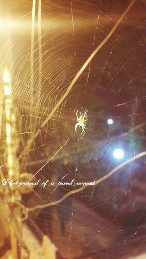 Spidey the artist ... Eyeem Spider Photography Insect_perfection Creative Shots EyeEm Animal Lover The Purist (no Edit, No Filter) Theworld_thru_my_eyes EyeEm Best Shots - Nature Darkness And Light Creativity At It's Finest Spidey The Artist