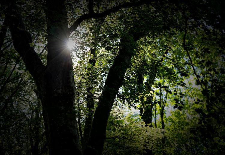 Trees &