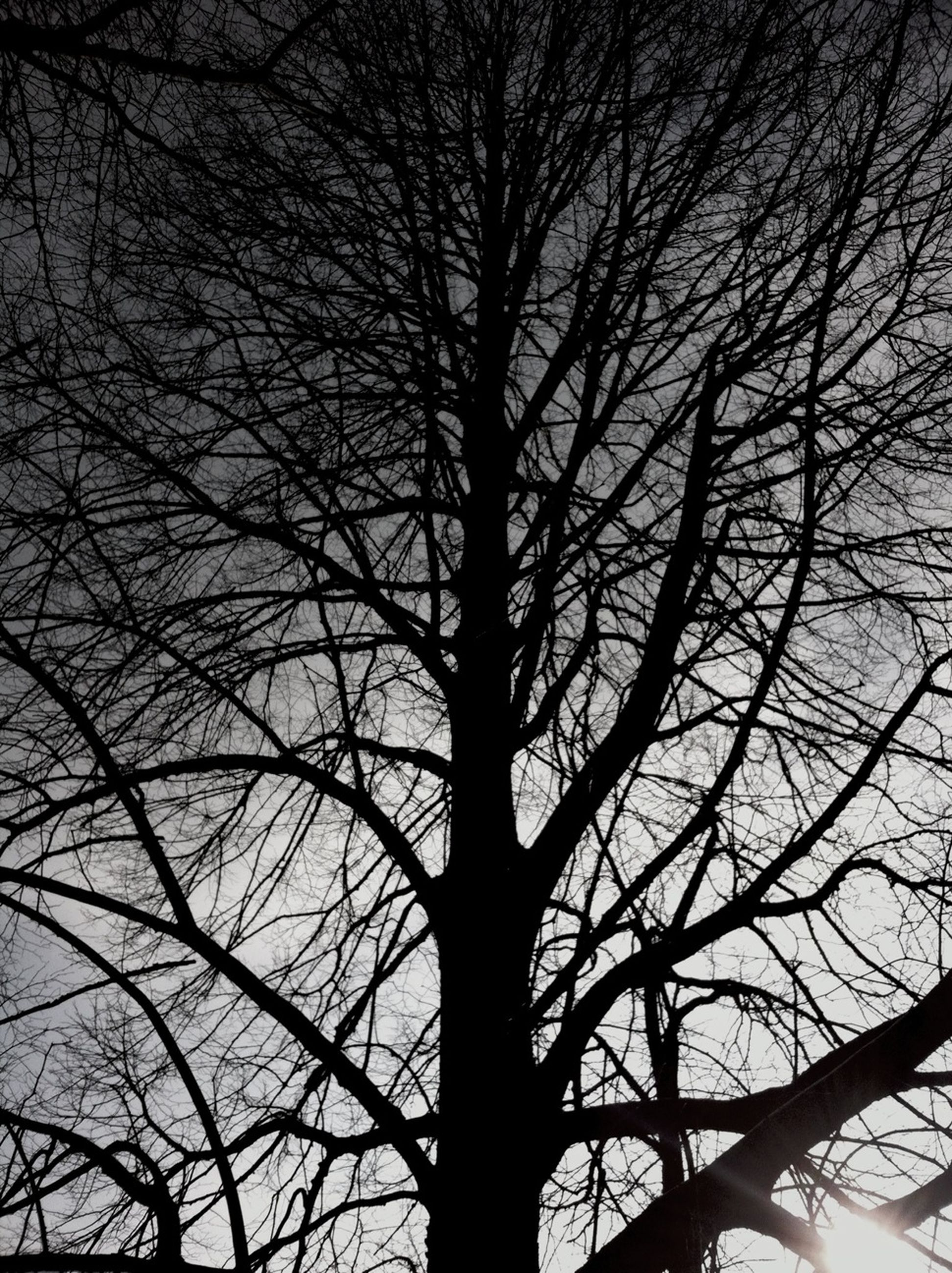 bare tree, tree, branch, low angle view, silhouette, sky, tranquility, nature, beauty in nature, scenics, tree trunk, growth, outdoors, backgrounds, no people, tranquil scene, dusk, sunset, full frame, idyllic