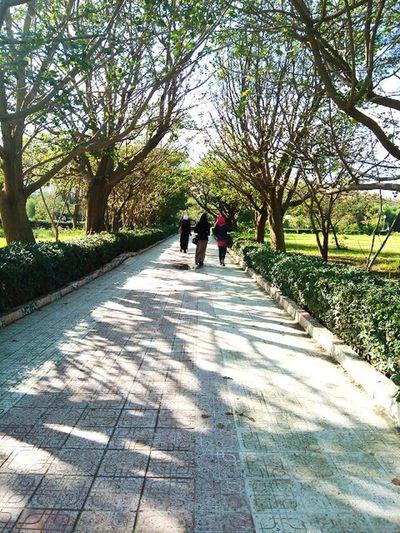 Sunny day vibes ! 🌄🌞 University Life Morning Sun Nature Makes Me Smile Beautyineverything Walkingunderthesun