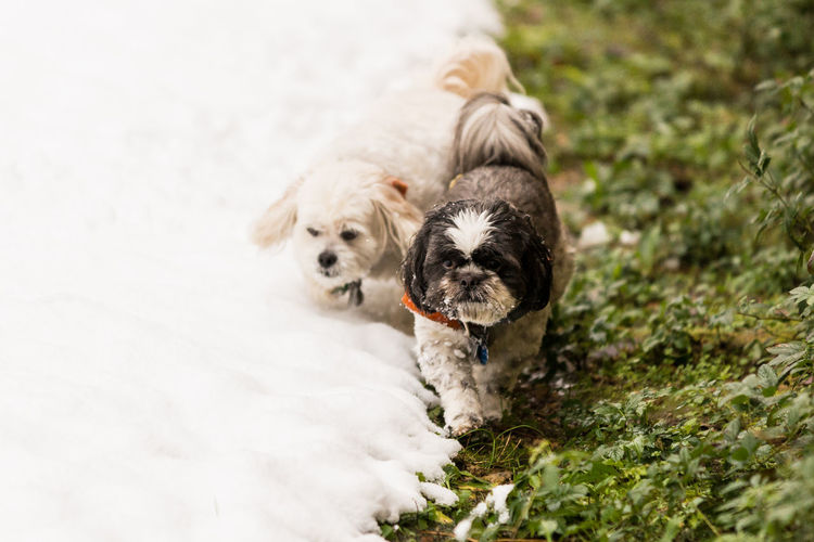 Close-Up Of Dogs On Snow Field