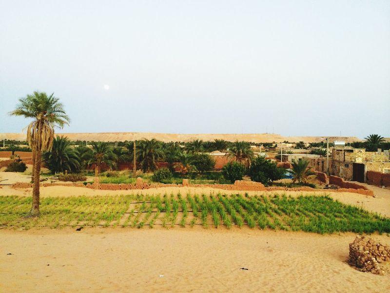 Algeria Sahara Desert Lansscape