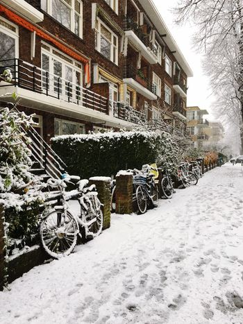 Streeft The Netherlands Rotterdam Bysicle Snow Winter Building Exterior Architecture Built Structure Cold Temperature Weather Outdoors Day