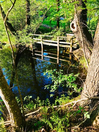Secret place Forrest Stockholm, Sweden Beauty In Nature Magic No People Day Full Frame Nature Water Plant Sunlight High Angle View Reflection Backgrounds Outdoors Green Color Tree Lake Growth Tranquility Beauty In Nature Close-up Land Shallow #FREIHEITBERLIN