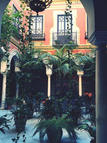 Sevilla Porche Atrium Trees Houses