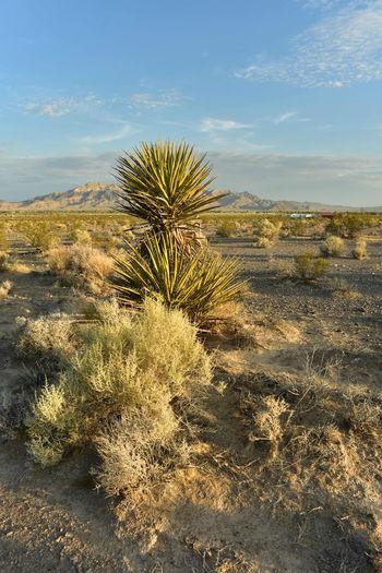 Mojave desert valley plants mountain range landscape pahrump, nevada,usa