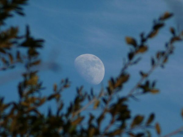 Daytime Moon Branches And Leaves Blue Sky Brushed Clouds Beauty In Nature Photography