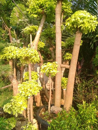 Garden Plant Pot Bonsai EyeEmNewHere EyeEm Nature Lover Nature Photography Tree Green Color Plant Life