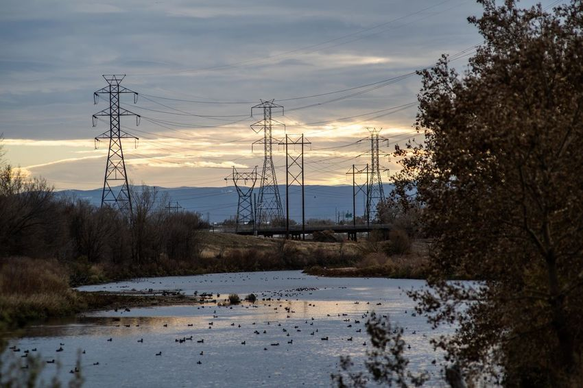 Tree Plant Electricity  Cable Power Supply No People Mountain Power Line  Denver Sunset Cloudy