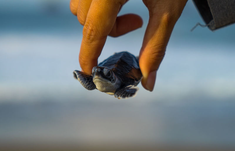 Cropped hand of person holding small turtle