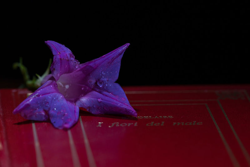 Drops Madness Writer Art Baudelaire Beauty Beauty In Nature Book Close-up Day Drop Flower Flower Head Indoors  Les Fleurs Du Mal No People Old Books Poem Poet Poetry Still Still Life