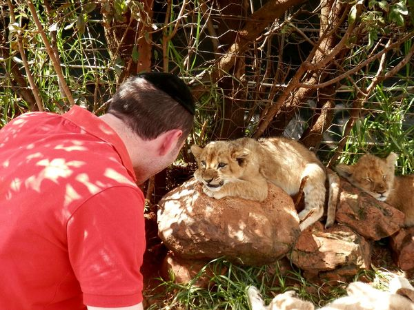 The Human Connection Face Off South Africa Johannesburg Lion Park
