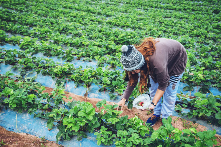 High angle view of woman wearing knit hat picking strawberry from farm