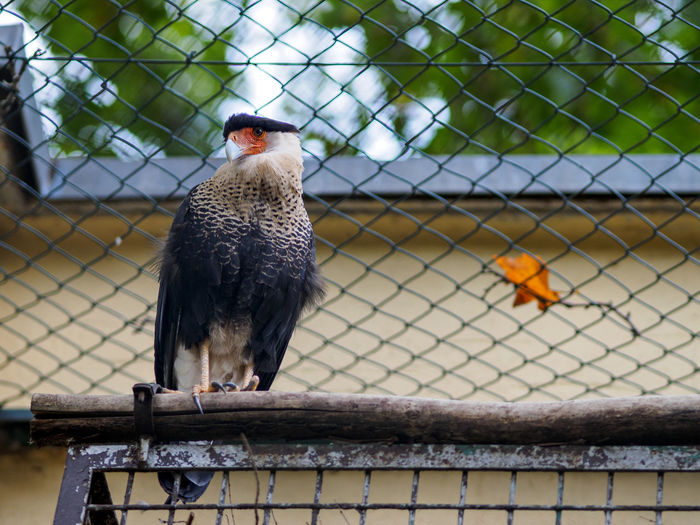 Low Angle View Of Bird Against Fence At Zoo