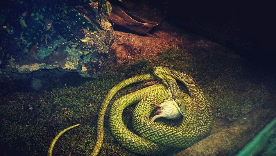 Nature laws Animals Snake EyeEm Best Shots EyeEm Nature Lover