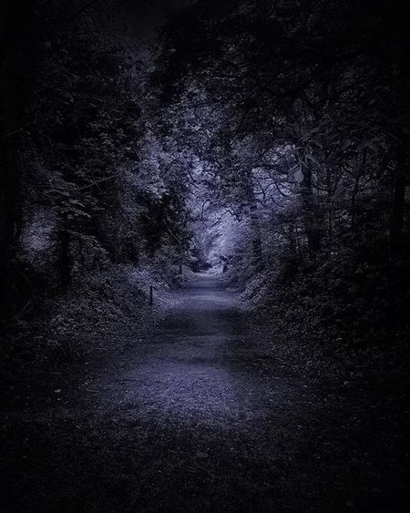 Darkmere... Tree Plant Forest Tranquility The Way Forward Night Direction