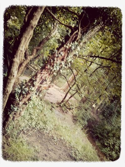 would anyone be interested in me uploading photos i've taken with my camera/manipulations? Park Nature Green Georgichan