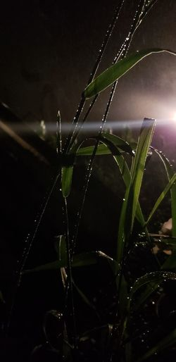 Water Black Background Spider Web Spider Drop Web Close-up Dew Blade Of Grass Leaf Vein Splashing Droplet Wet Leaking Plant Life RainDrop Rainy Season Bug