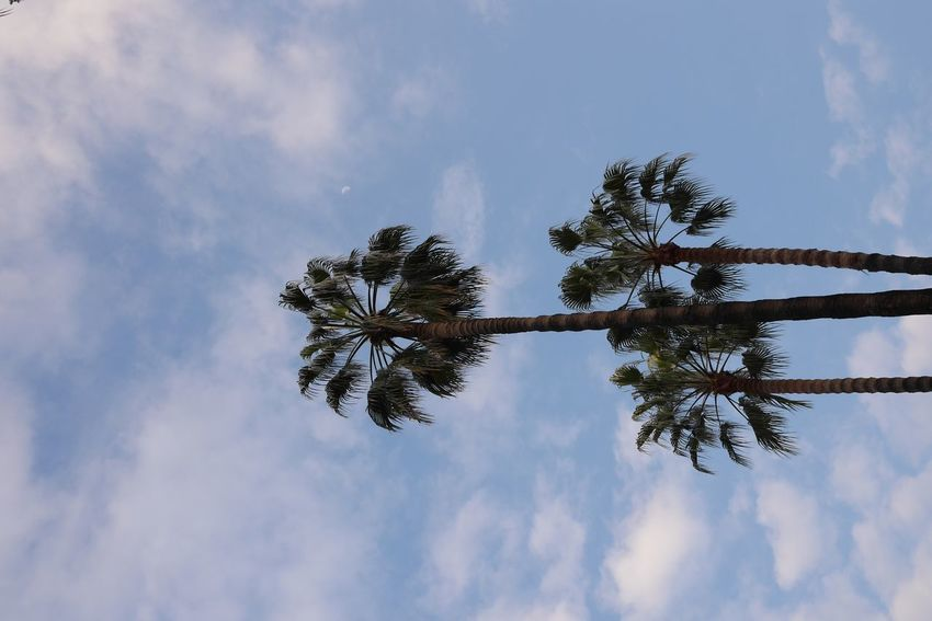 Beauty In Nature Cloud - Sky Day Growth Low Angle View Nature No People Outdoors Palm Tree Scenics Sky Tree