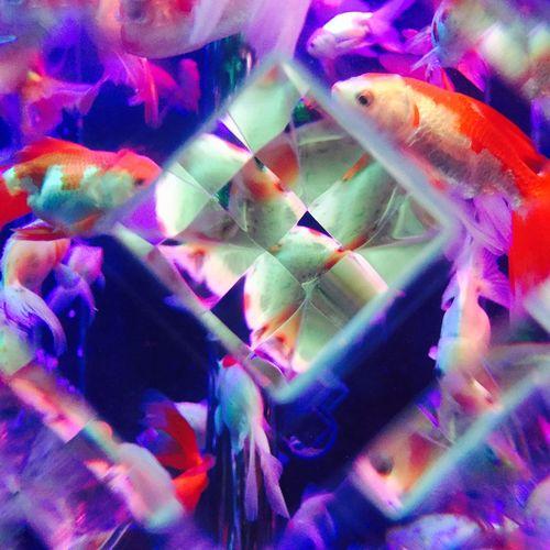 Art Aquarium2015