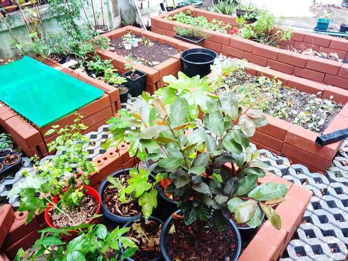 ชาวสวน Plants 🌱 สวน ปลูก ต้นไม้ ต้นไม้สวย Garden Fruit Tree Leaf Table High Angle View Planting Potted Plant Plant Close-up