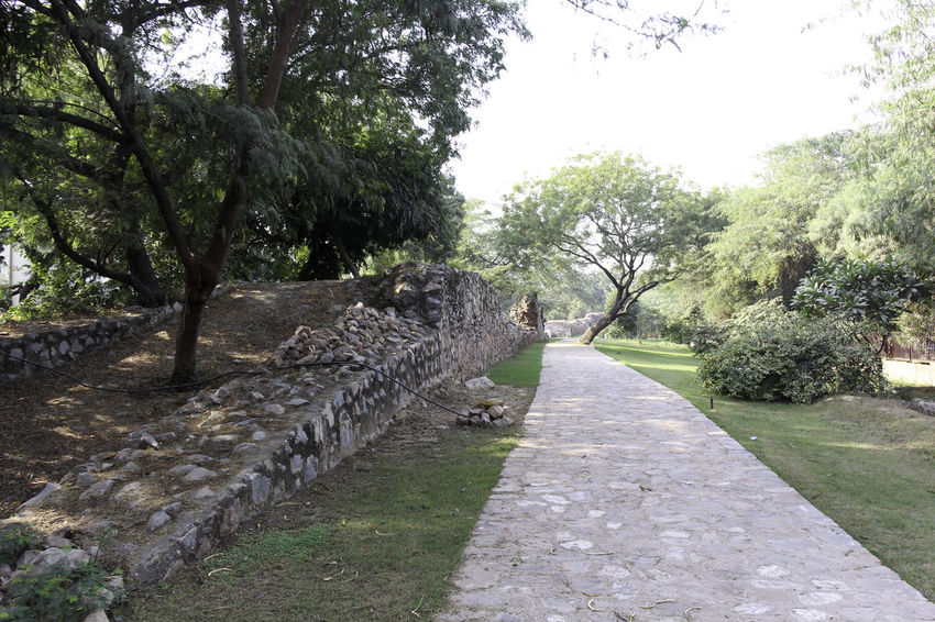 These are the ruins of the medieval Siri Fort in South Delhi, with a section of wall being visible and the stones that make up the wall, although this section of the wall surviving the centuries is pretty short. The fort was built by Alaudin Khilji to defend the core of his kingdom, primarily against the Mongols who were attacking the area. The fort helped in protection. In addition, the location of Siri where the supposed incident happened where the defeated Mongol army was brought and killed by trampling. These ruins are near Panchsheel Park and are set among greenery, the wall being many centuries old and yet standing firm in sections such as this. There is a paved walking path next to the wall, and greenery all around. Day Delhi Grass Green Greenery Growth India Medieval Fort Medieval Structures Nature Outdoors Path Paved Path Plant Plants Siri Fort Siri Fort Ruins Stone Wall Tree Walking Path Wall