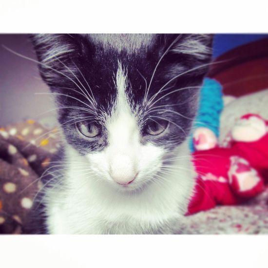 Lorenzo Cute Pets Ilovecats Cat Lovers Petselfie First Eyeem Photo