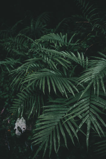 Phuket Thailand Beauty In Nature Botany Close-up Coconut Island Day Fern Freshness Green Color Growth Nature No People Outdoors
