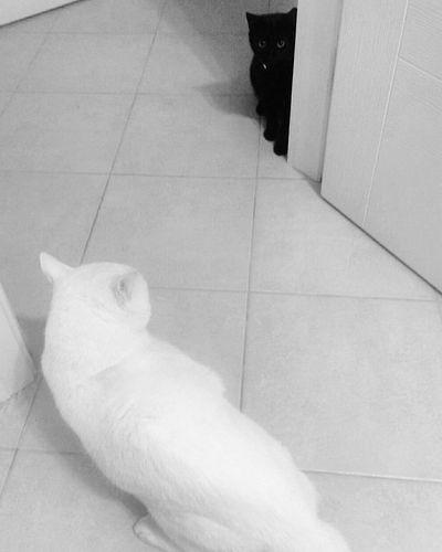 Taking Photos Yin & Yang Blackandwhite Photography Black And White Black & White NEM Black&white EyeEm Best Shots - Black + White Blacknwhite Black And White Collection  Getting Inspired