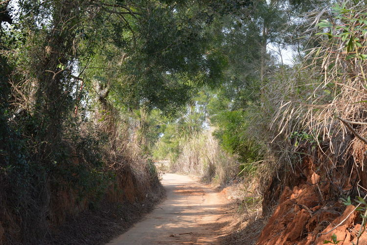 Alley Beauty In Nature Brown And Green Day Dirt Road Forest Growth Lush - Description Nature No People Outdoors Path Red Clay Red Soil Road Scenics The Way Forward Tranquility Tree Trekking Walk Path
